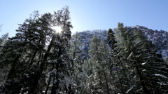 Looking up at trees with snow falling off Stock Footage