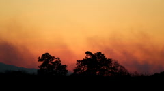 Forest Fire at Sunset - stock footage