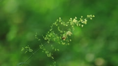 Grass Stock Footage
