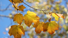 Foliage in focus - stock footage