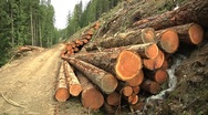 Fresh Cut Timber Logs and Water Stream on Forestry Logging Dirt Road Stock Footage