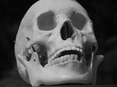 Stock Video Footage of Rotating skull. Black and white. SD.