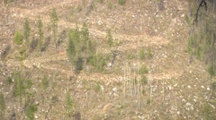 Dangerous Logging road zigzags up a forest clear-cut scar Stock Footage