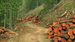 Stock Video Footage of Rugged Logging road lined with Clearcut Trees (3 strip technicolor zoom out).