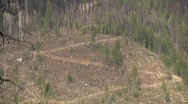 A ZigZag logging road punctuates this forest mountain Clearcut (zoom out) Stock Footage