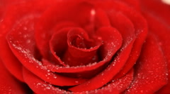 Rose flower background HD 1080p - stock footage