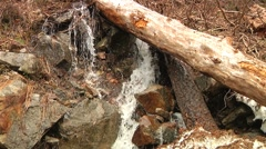 Snow Melt runoff forms waterfall rapids thru rocks and fallen Trees Stock Footage