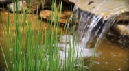 Stock Video Footage of Reeds and Waterfall Loop