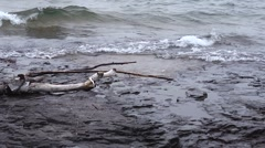 Drift wood superior - stock footage
