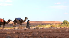 Male in Touareg robes leading camels Sahara Desert, Morocco, Africa - stock footage