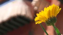 Dandelion flower before Tibetan monastery Stock Footage