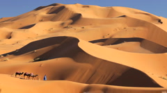 Local Touareg tribesman with Camel Train Sahara Desert, Morocco, Africa Stock Footage