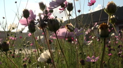 Flowers before Tibetan monastery in China Stock Footage