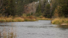 Forest River 73 29.97 - stock footage