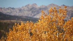 Sawtooth Autumn 128 29.97 Stock Footage