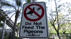 Don't Feed Pigeons Sign 01 HD Stock Footage