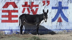 Donkey stands in front of huge characters in Chinese village Stock Footage