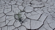 Drought Stock Footage