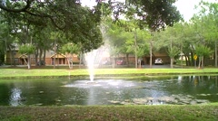 Pond with Tree Branches - stock footage