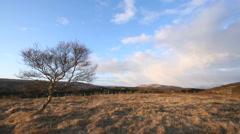 Tree at Hraunfoss - stock footage