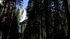 Upper Yosemite falls seen from woods Stock Footage