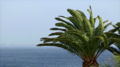 Palm and ocean on sunny windy day Stock Footage