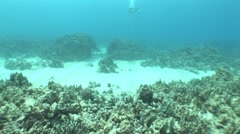 Underwater Scuba Diver Shoots Video Close to Ocean Floor Stock Footage