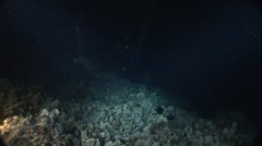 Night Dive on Ocean Floor Stock Footage