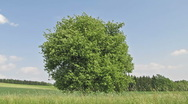 Tree on Sunny Day Stock Footage