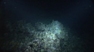 Night Diving Stock Footage