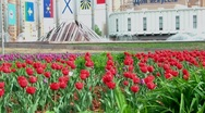 Stock Video Footage of Tulips and Fountains