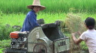 Rice harvest in China Stock Footage