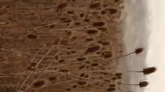 Seedpods Vertical 5 Stock Footage