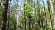 Magic forest Stock Footage