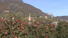 Italy Alto Adige church and apples Stock Footage