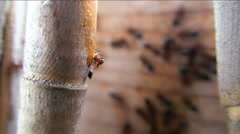 Ants are fed in a group - stock footage