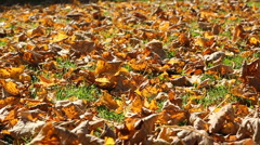 Autumn leafs Stock Footage