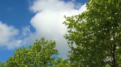 Green Leaves and Blue Sky Stock Footage