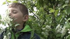kid sniffing flowers of wild cherry - stock footage