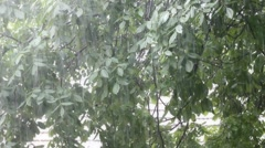Rain shower on nut tree leaves and overexposed rooftop in the background Stock Footage