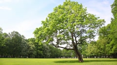 Green tree stands in clearing in city park Stock Footage
