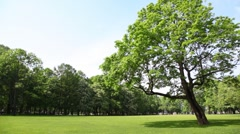 Panorama meadow in city park with green tree Stock Footage