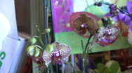 Stock Video Footage of Beautiful Orchids  Closeup