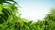 Stock Video Footage of Growing tropical forest