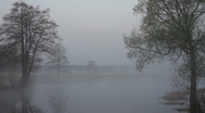 Fog, spring Stock Footage