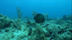 Fish Swims by Two Scuba Divers in Ocean Underwater Stock Footage