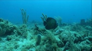 Stock Video Footage of Fish Swims by Two Scuba Divers in Ocean Underwater
