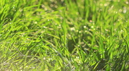 Green grass Stock Footage