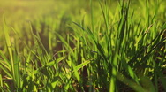 Spring grass at sunset Stock Footage