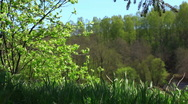 Windy in the forest Stock Footage